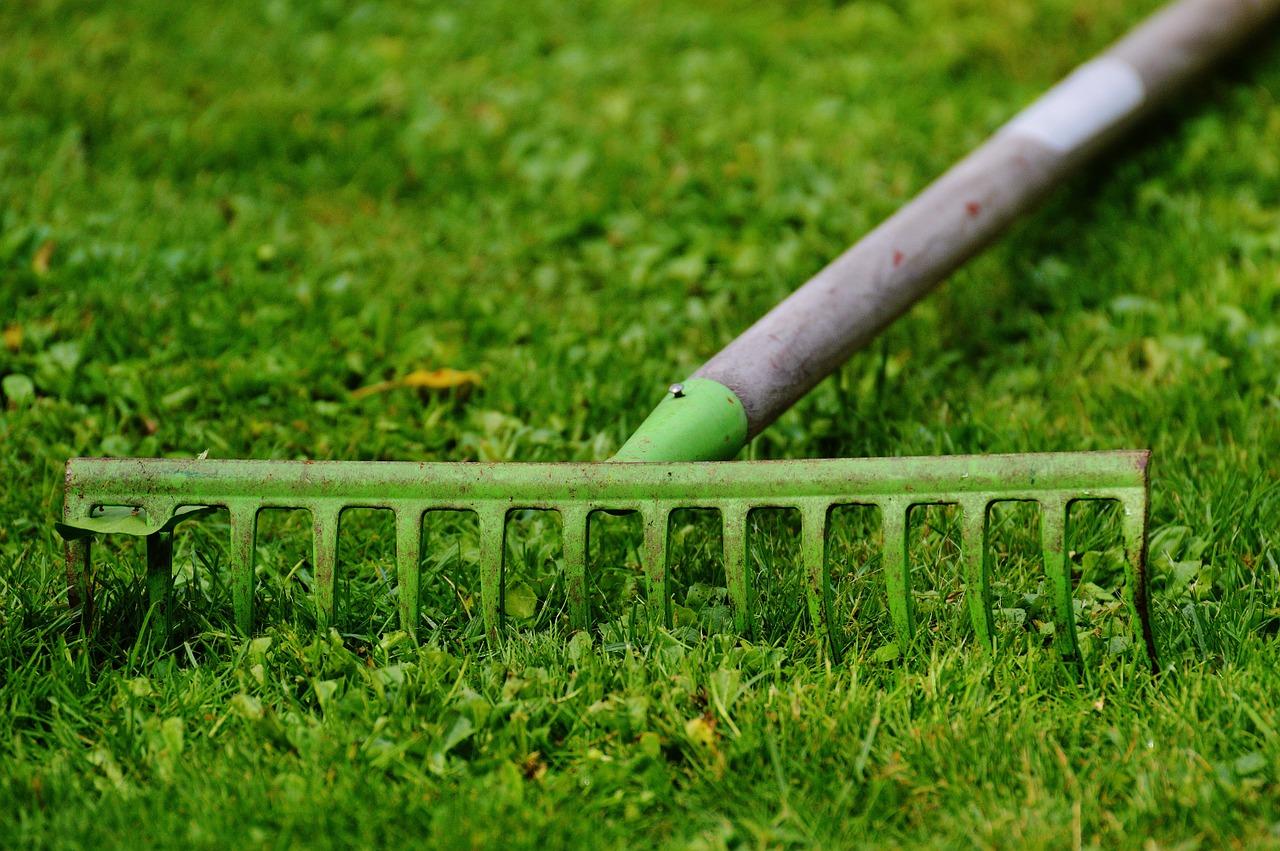 Jak odpowiednio pielęgnować trawnik?